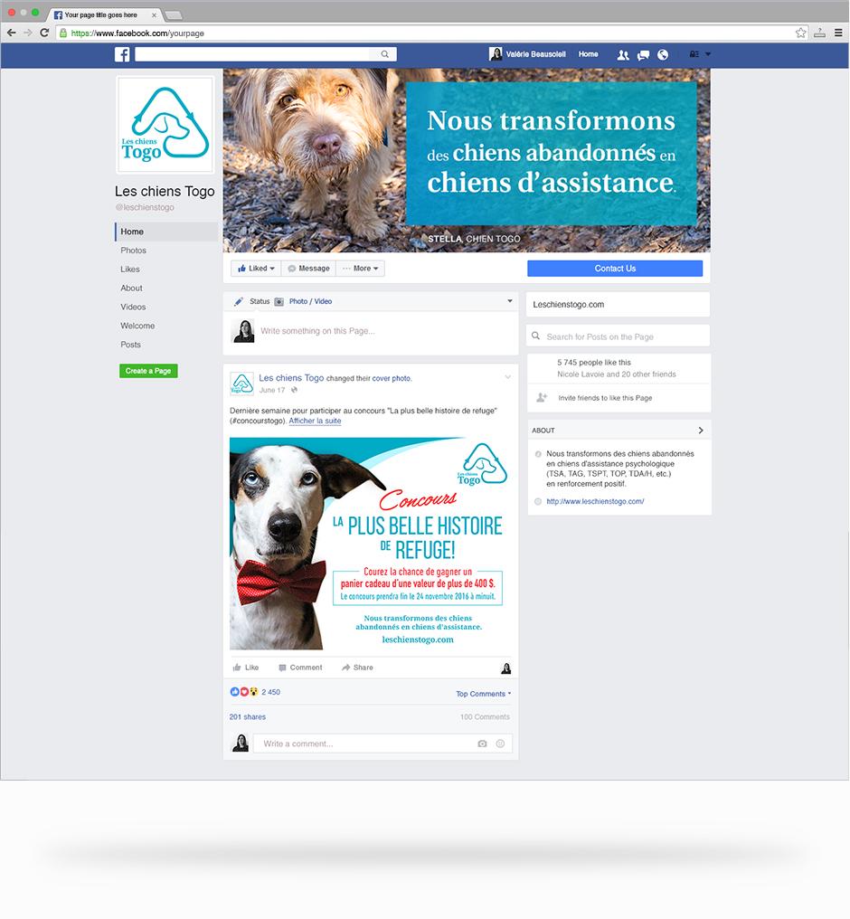Visuels pour la page facebook des chiens Togo.