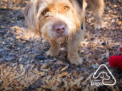 prise de photo pour les chiens Togo